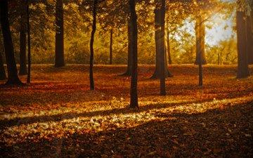 природа, листья, парк, осень, листопад, солнечные лучи