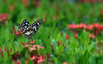 цветы, бабочка, поляна, насекомые