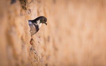 стена, птица, голубь, птаха