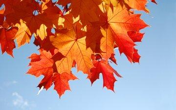 небо, листья, макро, листва, осень