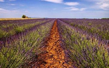 небо, дорога, цветы, поле, лаванда, горизонт, дом, ферма