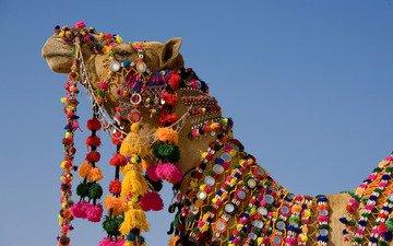 украшения, индия, верблюд, шея, сбруя, праздничная, нарядной