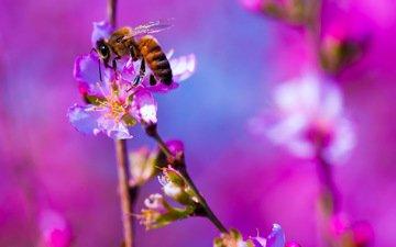 цветы, макро, насекомое, фон, пчела