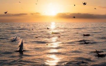 небо, море, горизонт, рассвет, птицы, дельфины