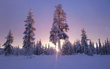 небо, деревья, солнце, снег, лес, зима, солнечный свет