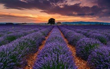небо, цветы, облака, дерево, поле, лаванда, лето, франция, прованс