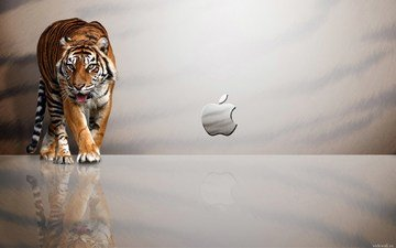 tiger, background, aplle