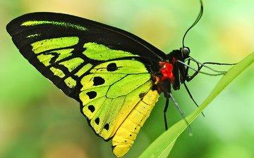 фон, бабочка, лист, игруха, травинка