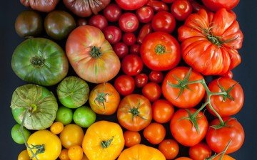 разноцветные, овощи, помидоры, томаты