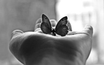 бабочка, черно-белая, фотография, ладонь, м