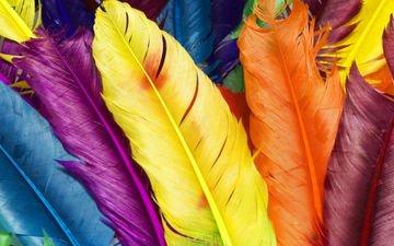 текстура, макро, разноцветные, цвет, перья, яркие, перо