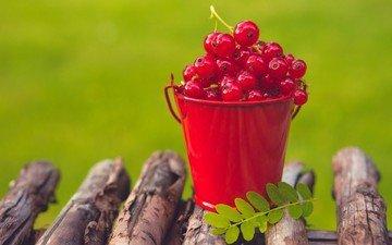 листья, красная, ягоды, бревна, смородина, ведро, ведерко