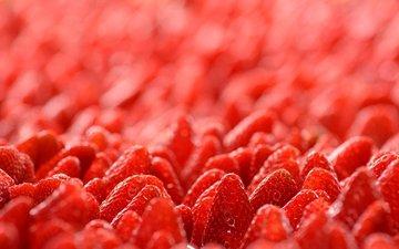 макро, клубника, ягоды, лесные ягоды, земляника