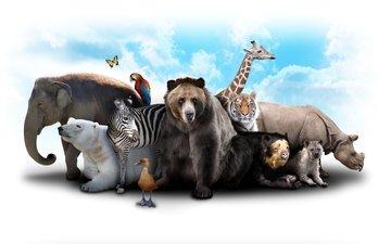 тигр, небо, облака, зебра, слон, медведь, бабочка, носорог, жираф, попугай, звери, белый медведь, утка, коала, гиена