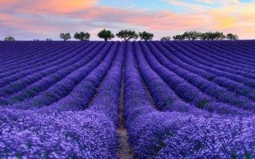 небо, цветы, облака, дерево, поле, лаванда, франция, прованс