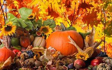 природа, виноград, фрукты, яблоки, осень, кукуруза, подсолнухи, овощи, киви, тыква, груши, инжир, каштаны