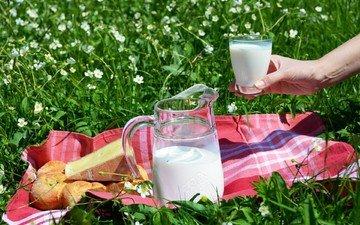 цветы, трава, рука, сыр, хлеб, стакан, молоко, кувшин, пикник