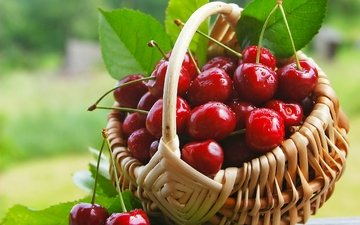 черешня, ягоды, лесные ягоды, вишня, корзинка, вишенка, парное, сладенько