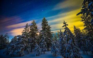 night, trees, snow, color, forest, winter, northern lights, tree, aurora, finland, lapland