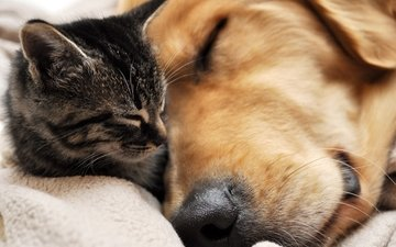 cat, sleep, dog, friendship, faces