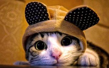 кот, кошка, взгляд, уши, капюшон