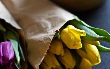 цветы, бутоны, лепестки, божья коровка, тюльпаны, желтые, фиолетовые, букеты