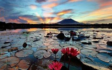 озеро, утро, остров, кувшинки, водяные лилии, филиппины, лусон, sampaloc