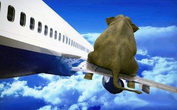 the sky, clouds, the plane, elephant