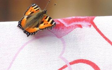 рисунок, макро, насекомое, бабочка, крылья, ткань