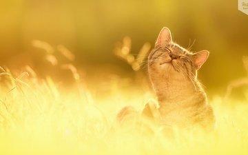 кот, кошка, жизнь, удовольствие, прекрасна