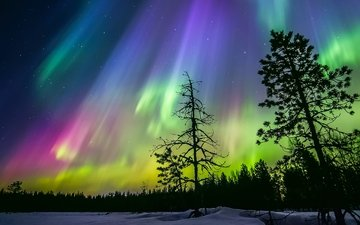 the sky, night, trees, snow, forest, winter, stars, northern lights, silhouettes, finland