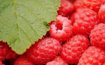 зелёный, макро, малина, красная, лист, ягоды