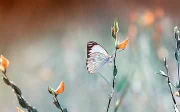 цветы, насекомое, фон, бабочка