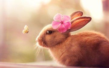 насекомое, цветок, шерсть, бабочка, кролик, уши, зайчик