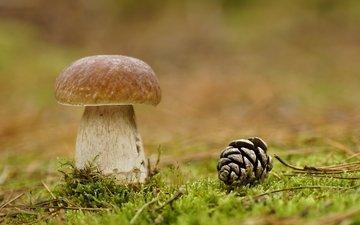 природа, лес, макро, гриб, мох, шишка