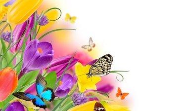 цветы, насекомые, весна, тюльпаны, бабочки, жёлтая, красива, тульпаны, цветы, парное, butterflies, весенние, красочная, лиловая