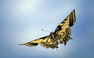 макро, насекомое, фон, бабочка, крылья