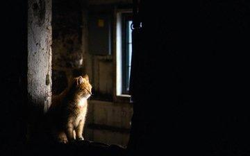 кошка, дом, уют