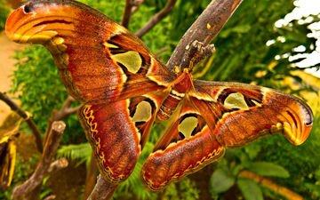 макро, насекомое, крылья, моль, big moth