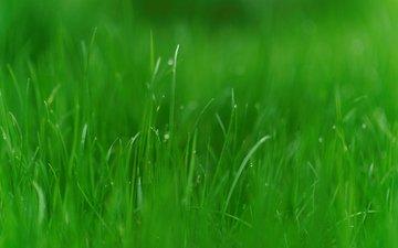 трава, природа, зелень, макро, ава