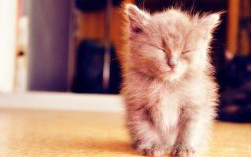 кошка, котенок, пушистый, дремлет, миленький
