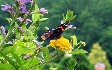 цветы, трава, насекомое, бабочка