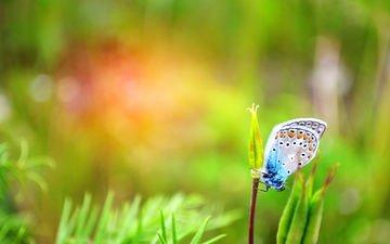 макро, насекомое, бабочка, растение
