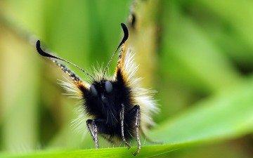 глаза, макро, насекомое, бабочка, ziva & amir, apollo