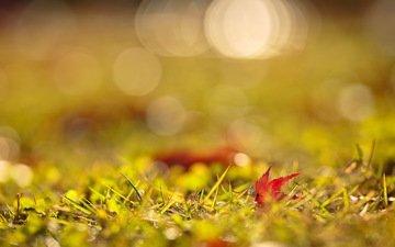 свет, трава, листья