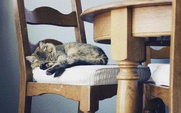 кошка, стул, дом, уют