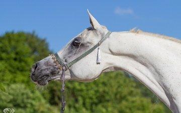 морда, небо, лошадь, профиль, конь, грива, шея, (с) oliverseitz
