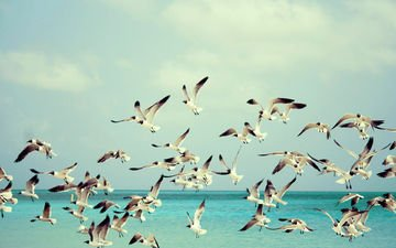 the sky, water, sea, flight, wings, birds, seagulls