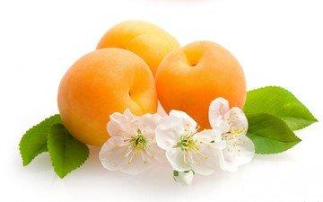 цветы, фрукты, белый фон, листики, абрикосы