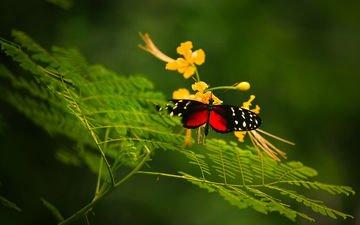 макро, насекомое, цветок, бабочка, крылья, растение